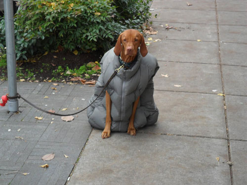 Dog with coat