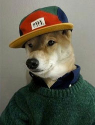Dog in People Clothes