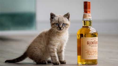 Peat mouser cat Glenturret
